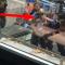 Mit 40 Beamten – Polizei nimmt Kontra K fest!